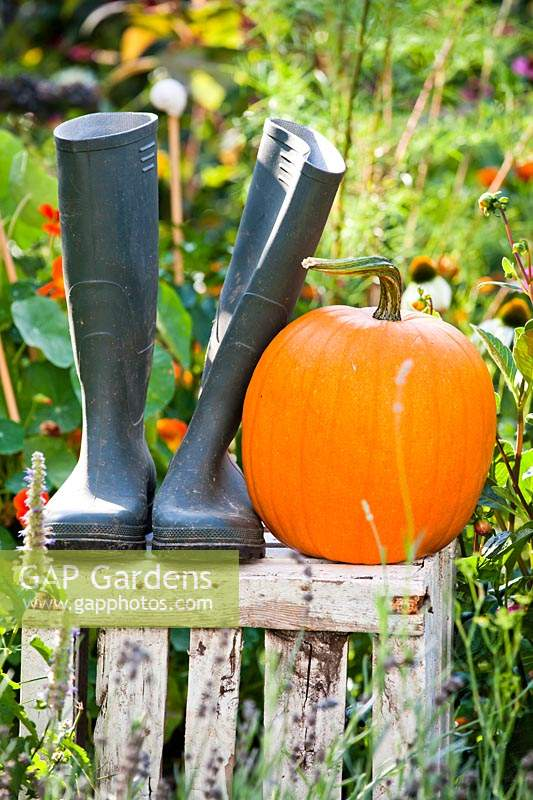Wellington boots and pumpkin displayed on a crate in vegetable garden.