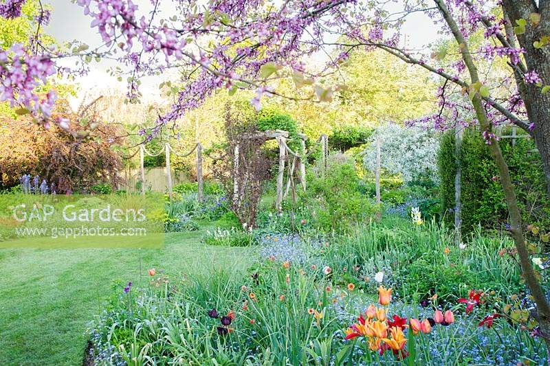 View across lawn with informal flower beds of Tulipa and Myosotis towards 