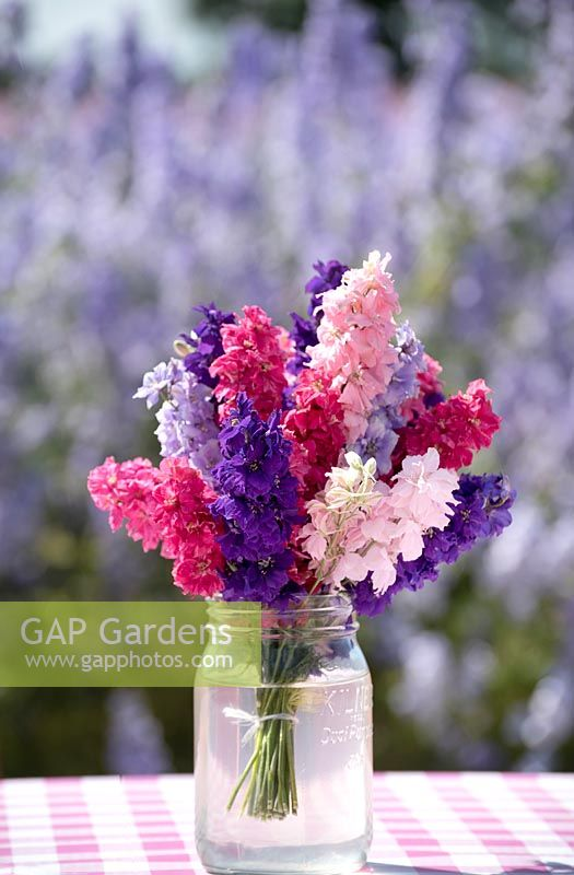 Jar of pink blue and purple larkspur - Delphinium consolida.