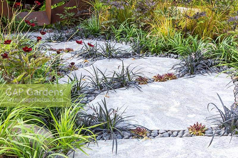 Gap Gardens Stepping Stone Path With Ophiopogon Nigrescens
