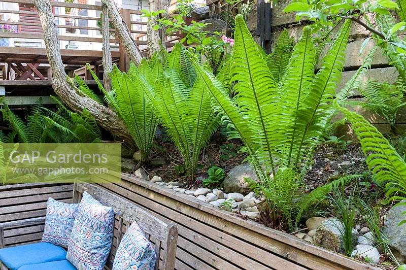 Raised bed with wooden edging, planted with ferns. In front a wooden bench with cushions.