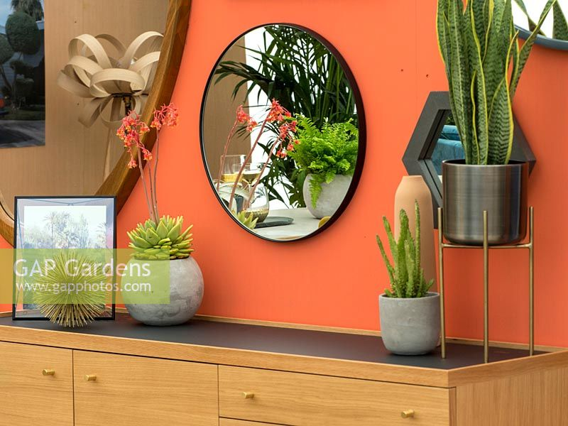 Succulents as houseplants in a home environment including Sanseveria and 
