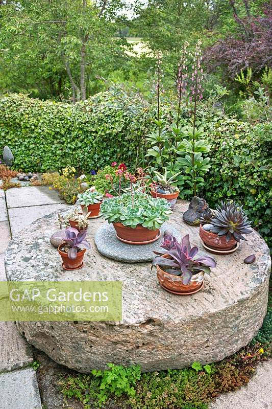 Collection of potted succulents including Echeveria and Agave on 
