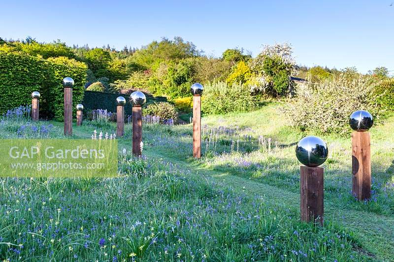 View across meadow with Camassia subsp. leichtlinii to grass path with an avenue of 