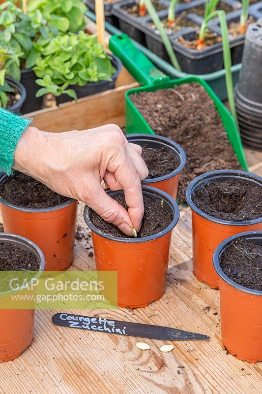 Woman carefully sowing a single seed in each pot