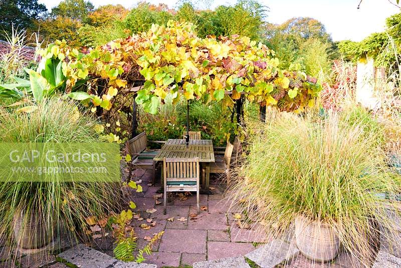 Vine covered arbour and dining area in the sunken garden, framed by a pair of potted Chionochloa conspicua at the Barn House, Chepstow, UK.