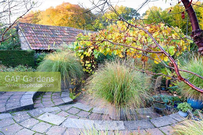 Sunken garden with pots of Chionochloa conspicua and a vine covered arbour over a dining area at Barn House, Chepstow, UK.