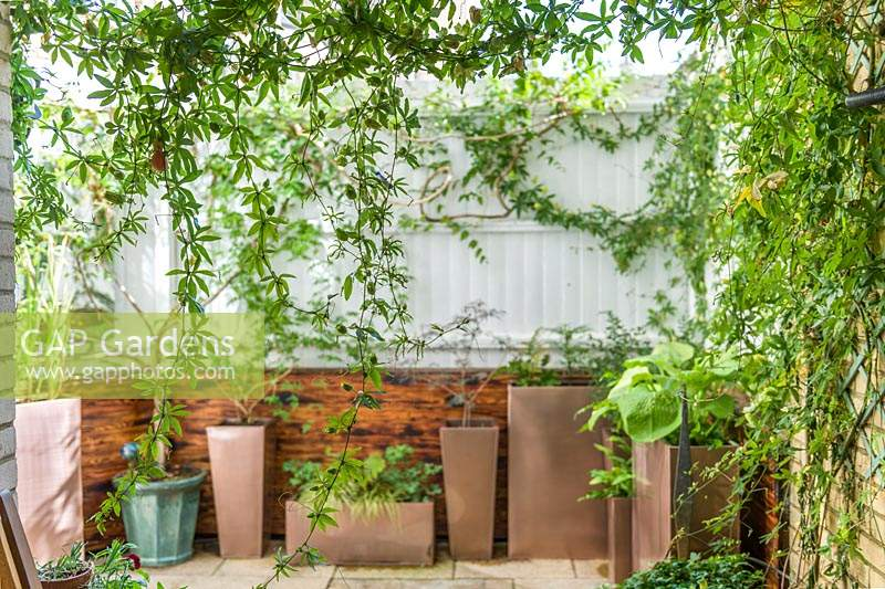 A small contemporary courtyard garden, with containers of plants against white painted wooden fence.