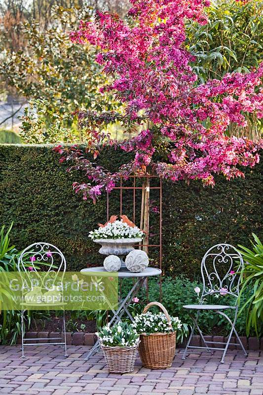 Relaxing area with metal garden furniture surrounded by blossoming Malus 'Paul Hauber' - Crabapple 'Paul Hauber'.