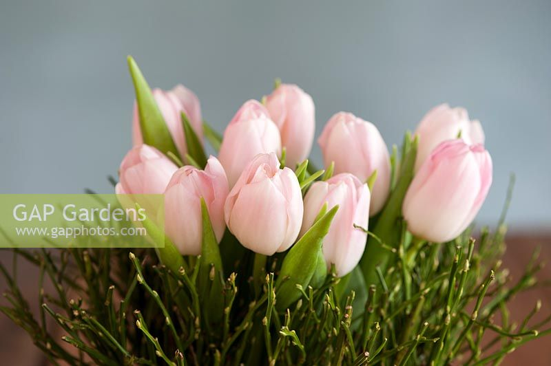 Pale tulips displayed in a vase decorated with Vaccinium - Bilberry branches tied around a jar.