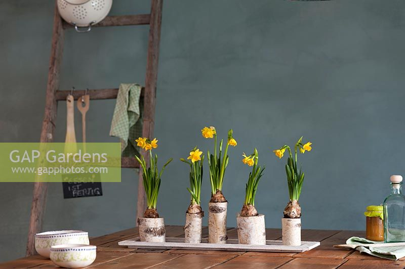 Floral arrangement with flowering Narcissus - Daffodils and birch branches on wooden table.