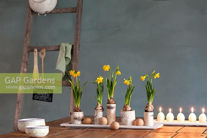 Floral arrangement with flowering Narcissus - Daffodils, birch branches and eggs.