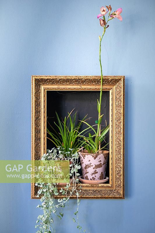 Golden frame with arranged plants in pots.