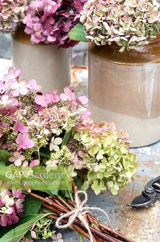 Mixed bunch of garden hydrangeas for arranging