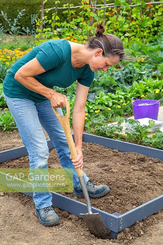 Woman levelling soil around the wooden frame which will contain the checkerboard herb garden