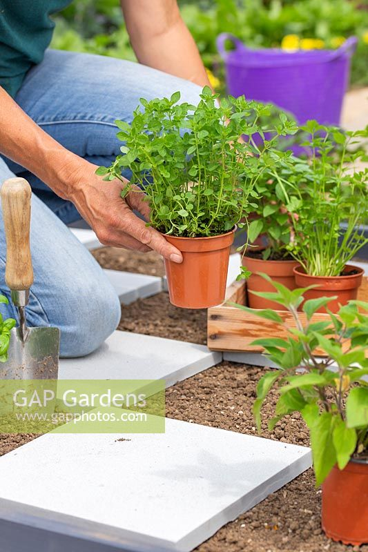 Woman placing potted herbs in checkerboard garden ready for planting