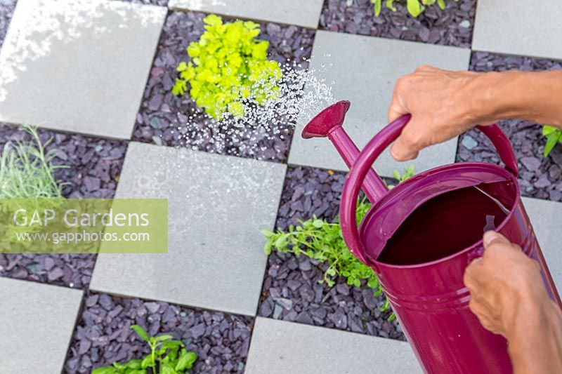 Woman watering newly planted herbs in checkerboard garden using a watering can