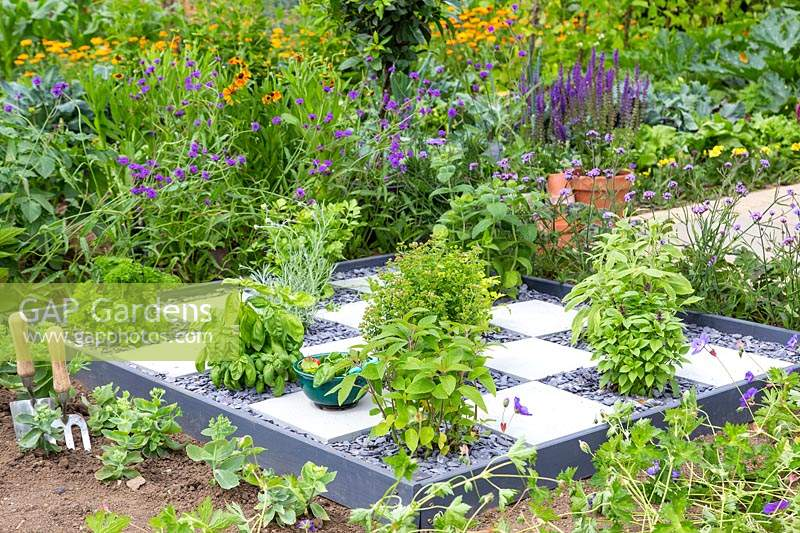 Checkerboard garden with established herbs