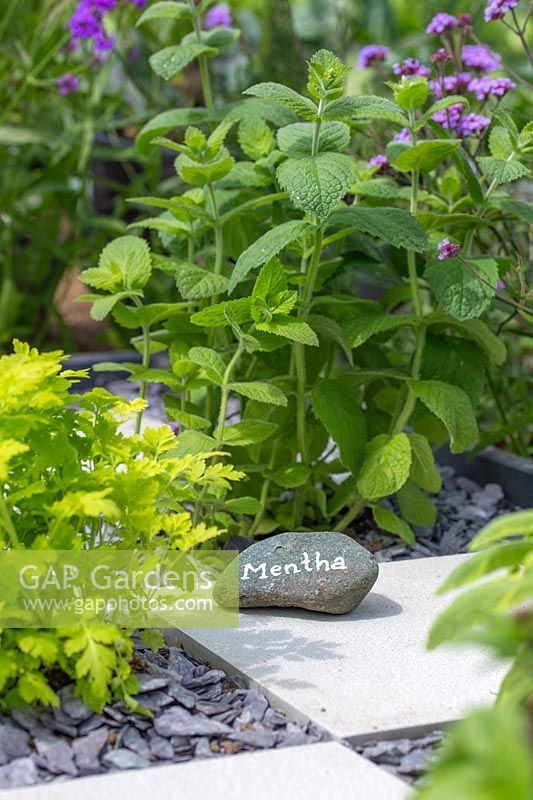 Label stone in checkerboard herb garden