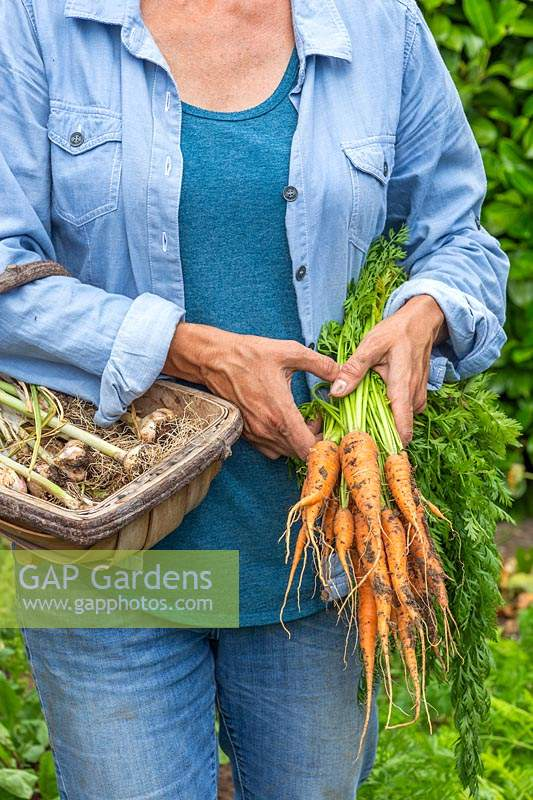 Woman holding trug with harvested Garlic and a bundle of newly harvest Carrot 'Karnavit'