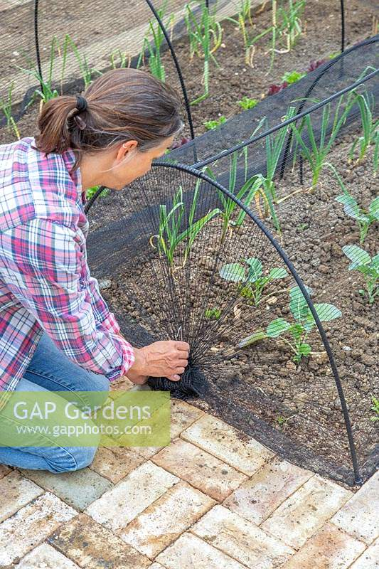 Woman setting up a netting tunnel in vegetable garden