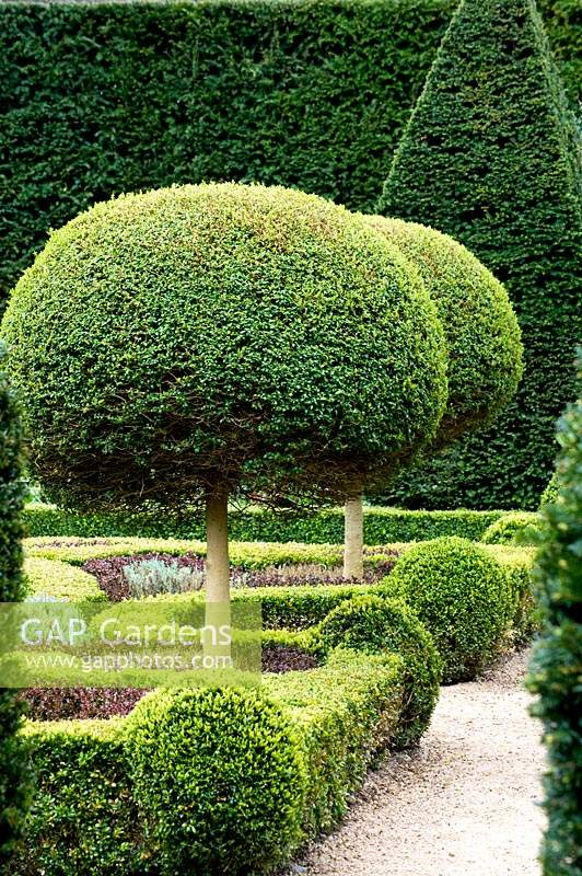 View of topiary standards in topiary and knot garden at Abbey House Gardens, Malmesbury, UK.
