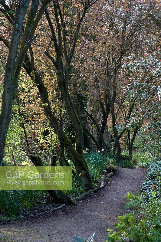 View down pathway in spring woodland garden. Abbey House Gardens, Malmesbury, UK.