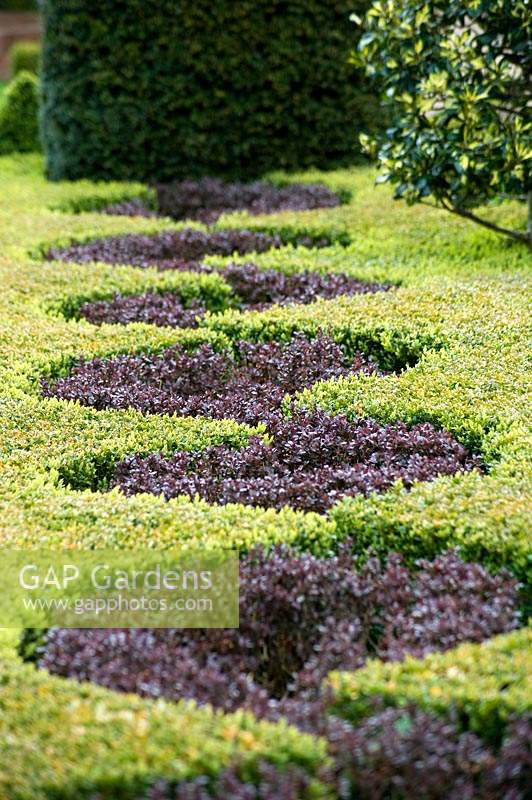 Detail of the Knot garden with Buxus and Berberis. Abbey House Gardens, Malmesbury, UK.