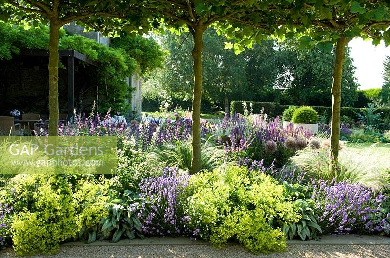 Borders of ornamental grasses and flowering perennials create soft texture, planted under pleached trees.
