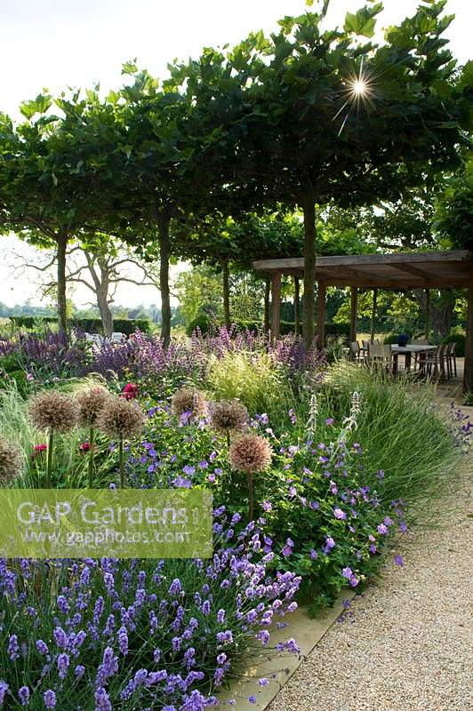 View of flowering border, pleached trees and wooden pergola and dining area.