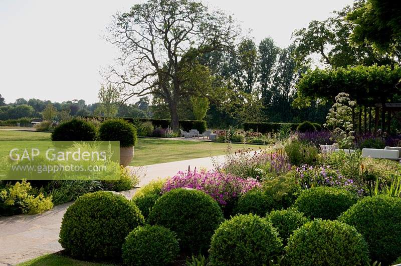 Clipped Buxus balls with flowering perennials in modern borders.