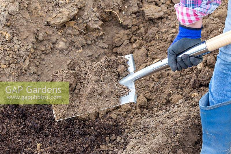 Woman adding soil on top of trench with spade.
