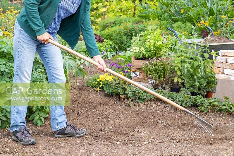 Woman raking the ground ready for building brick herb garden
