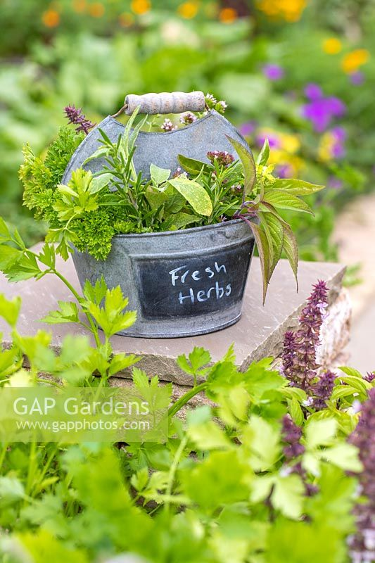 Zinc container with freshly picked herbs.