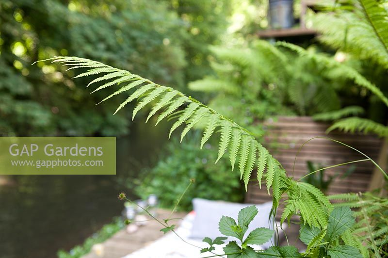 Fern leaf growing on waterside terrace
