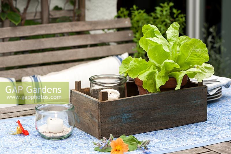 Wooden table on a terrace in summer decorated with a salad plant in a pot and candles