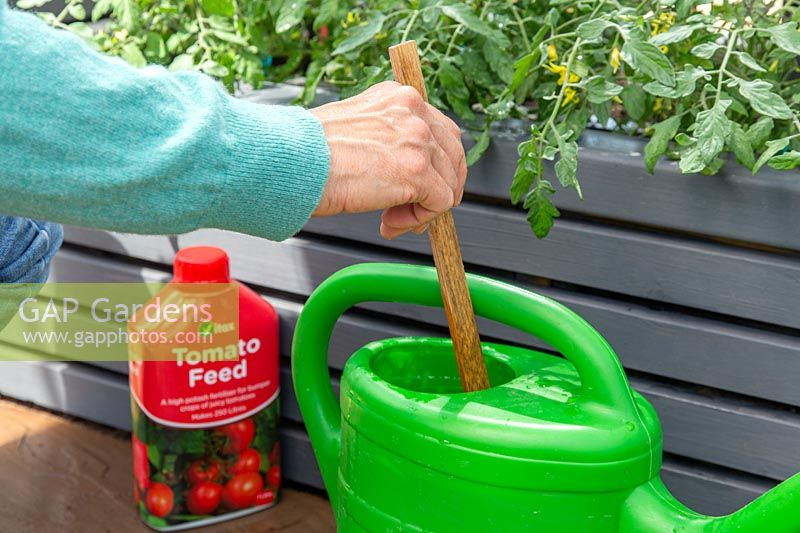 Stirring tomato feed into watering can using a stick