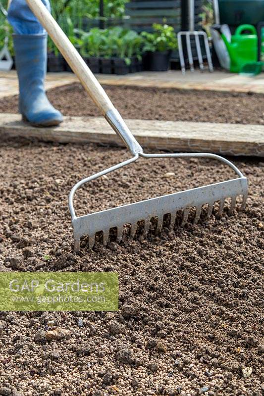 Woman using a rake to create a fine tilt and a bed ready for sowing.
