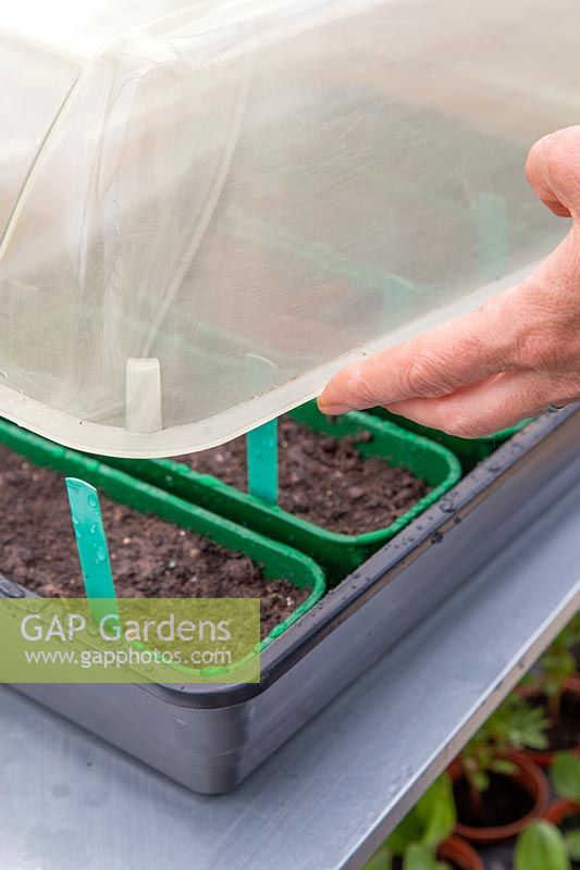 Person adding lid to propagator with various seed trays.