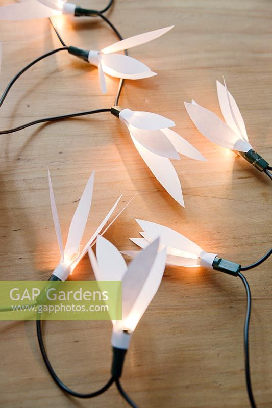 Wrap the paper shape around the individual bulbs and fasten with pieces of sellotape, pulling out some of the petals to open out the flowers.