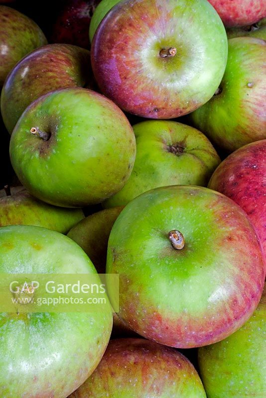 Apple 'Northwood' - Cider Apple