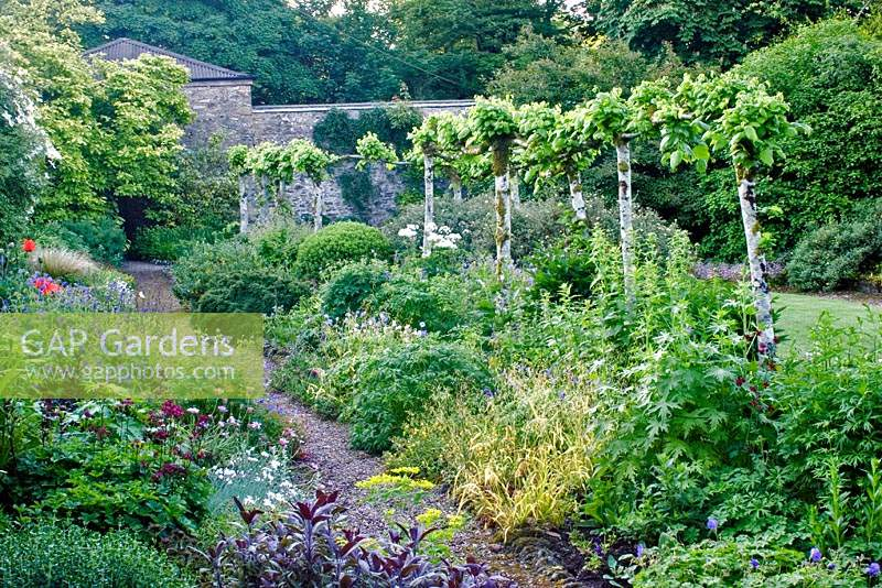 The Lower Walled garden at Heddon Hall, Devon, UK, with pleached Tilia - Lime trees, mixed shrubs and herbaceous plants.