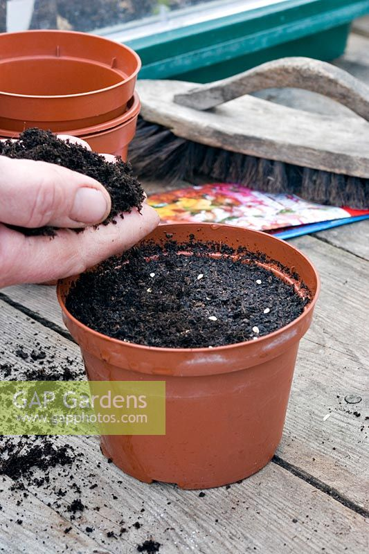 Person covering seeds with compost.