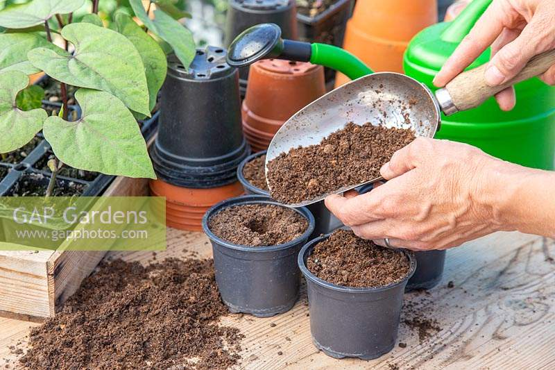 Person topping up the pots with compost using a scoop.