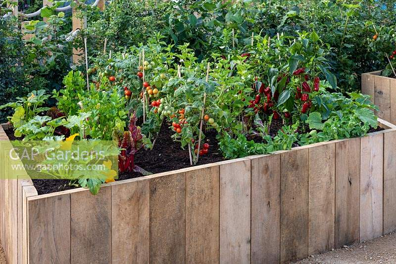 A raised wooden bed with vegetables such as courgettes, beetroot, tomatoes and chilli peppers.