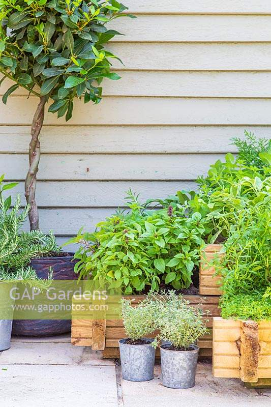 Raised wooden planter with mixed herbs