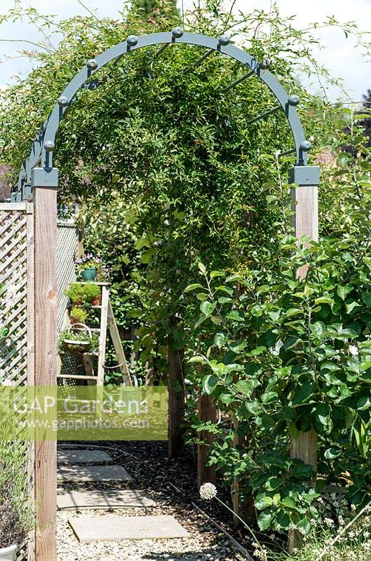 Wooden arch with Jasminum - jasmine