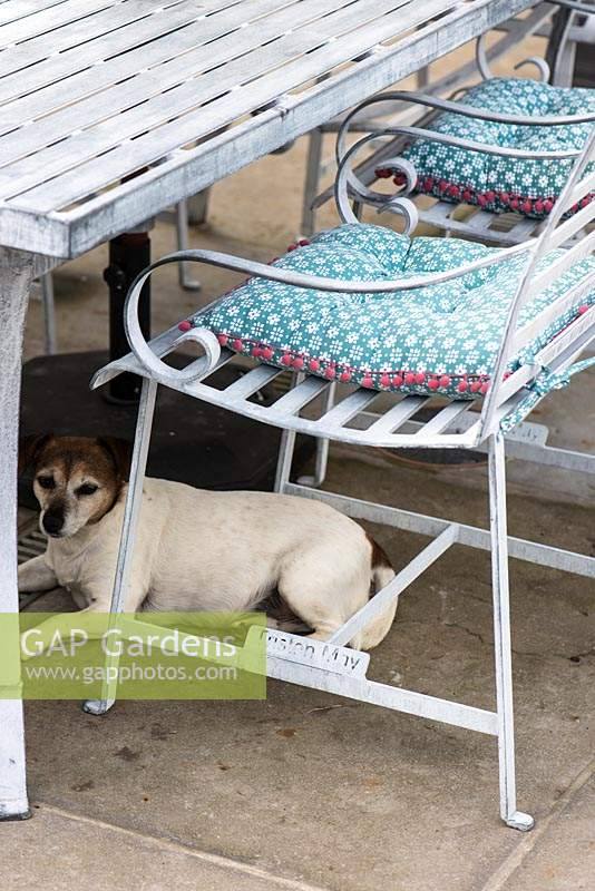Dog resting under table in the shade