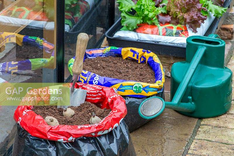 Material and tools ready for planting seed potatoes in a compost bag