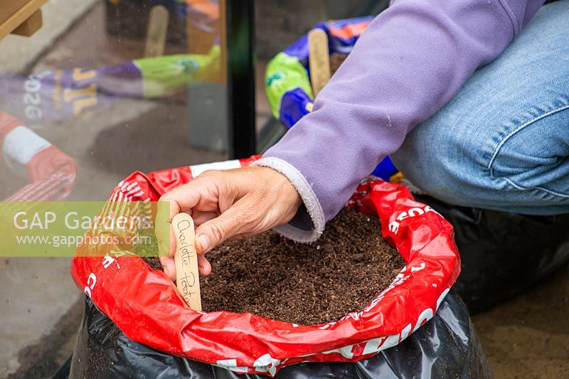Woman adding label to newly planted seed potato bag